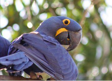 Convergence entre le cerveau des perroquets et des primates