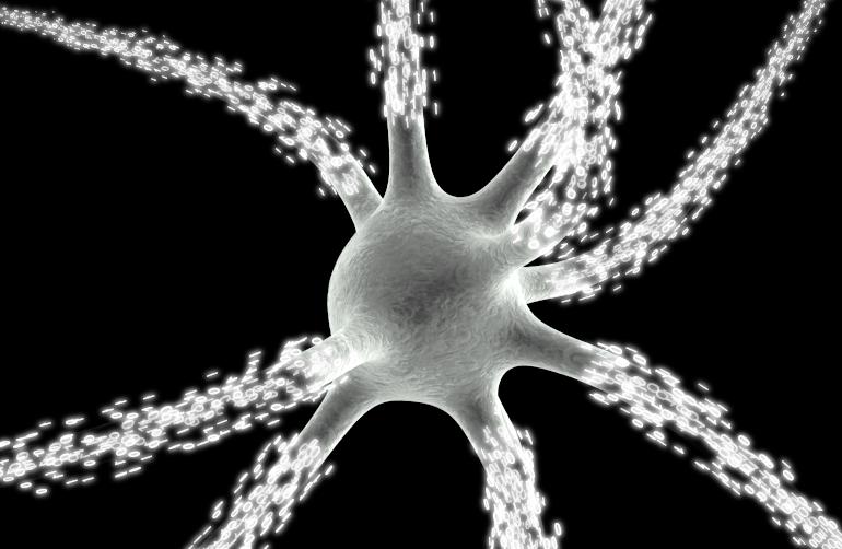 Formation en neurosciences computationnelles