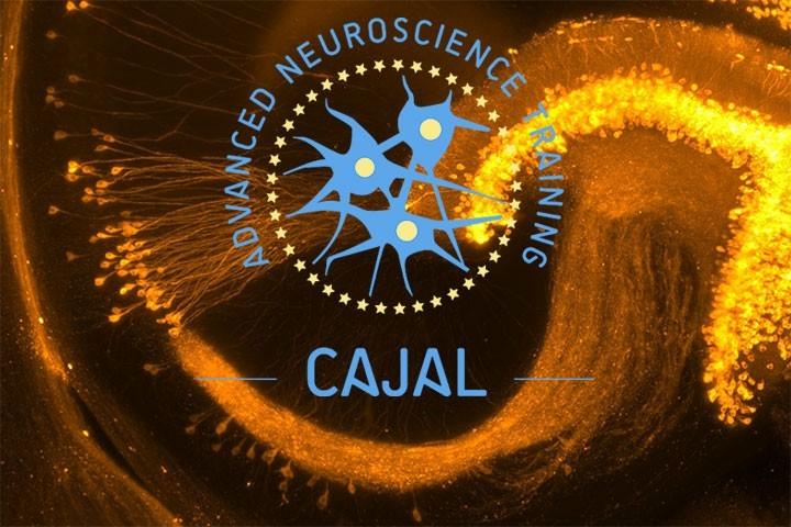 CAJAL course: Neural circuit basis of computation and behaviour