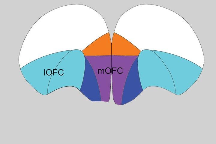 Shauna Parkes et al in Neurosci Biobehav Rev