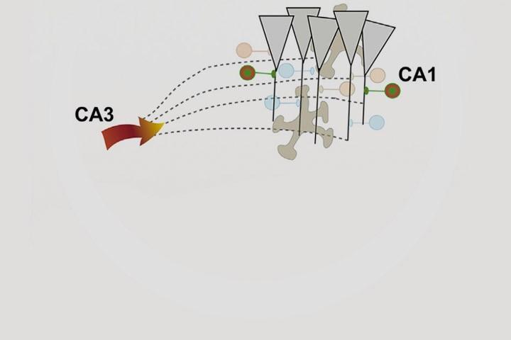 José Cruz, Arnau Busquets-Garcia, Edgar Soria-Gomez et al in Cell Reports