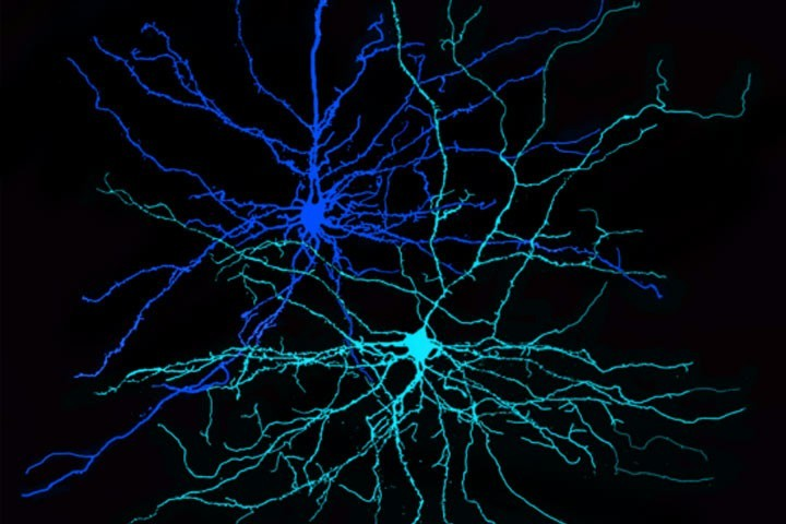 Cajal course :  Optogenetics, chemogenetics and biosensors for cellular and circuit neuroscience