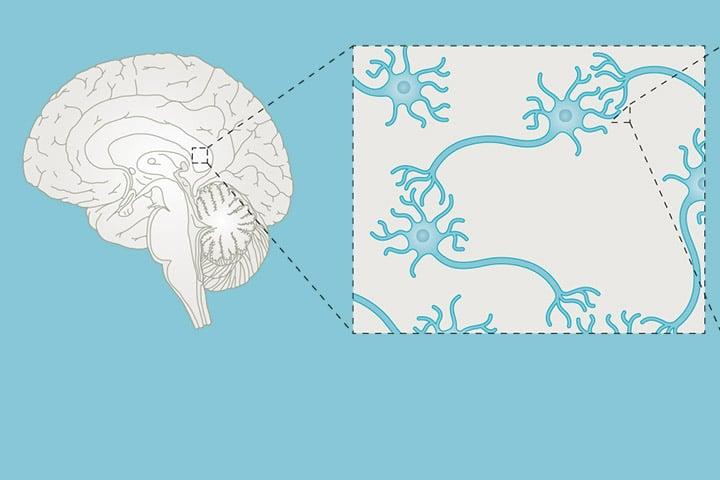 D. Choquet, M. Sainlos and JB. Sibarita in Nature Reviews Neuroscience