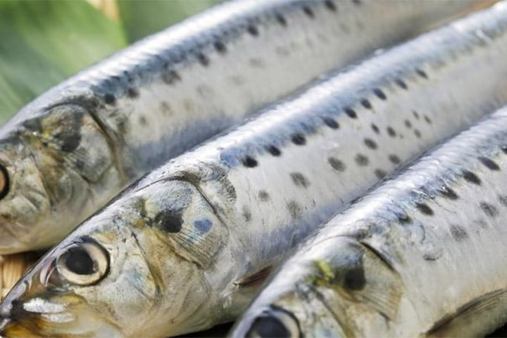 Des ingrédients marins naturels pour booster le cerveau vieillissant ?