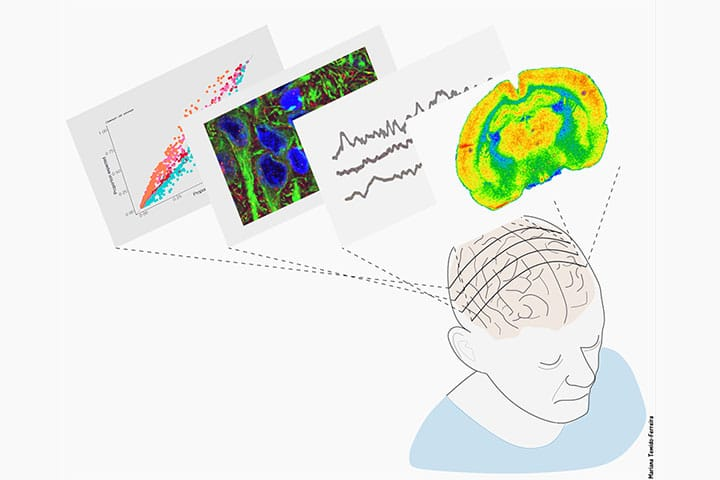 """""""Ageing cognition"""" Cajal course: registration are open"""